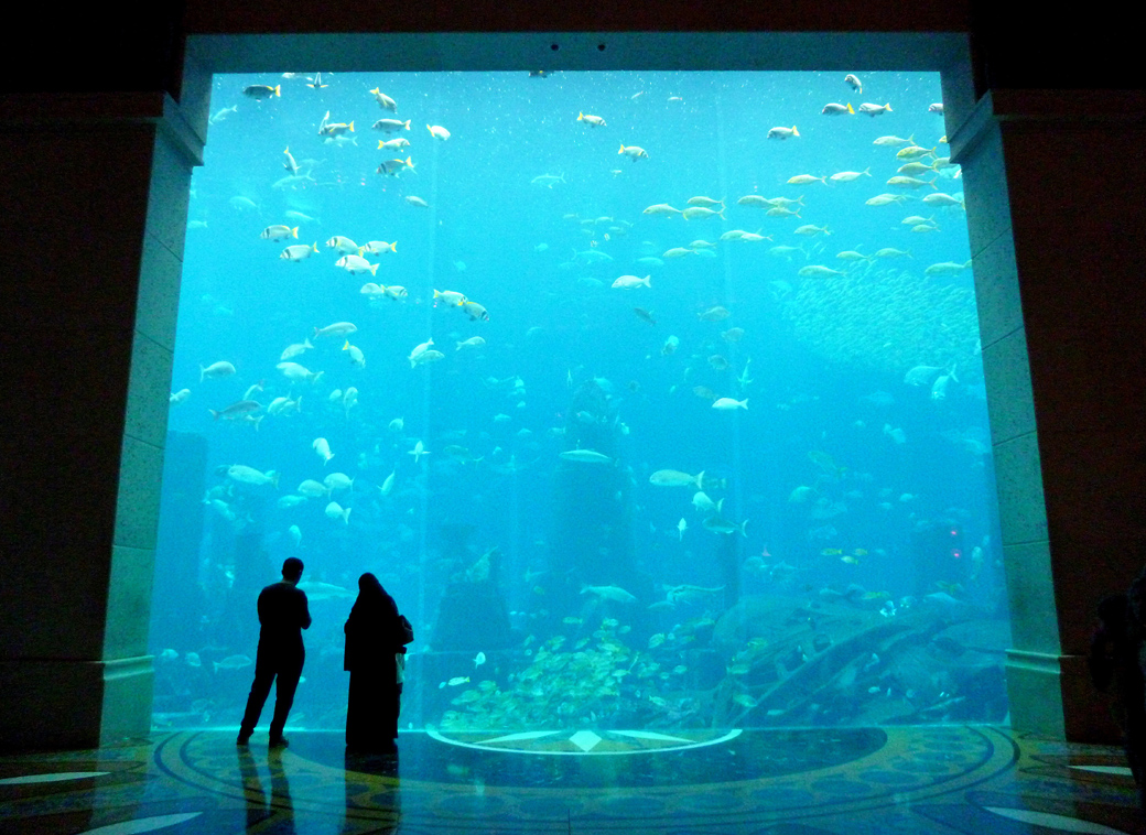 Atlantis the Palm Dubai the hotel's aquarium, Seen by Solomon travel blog