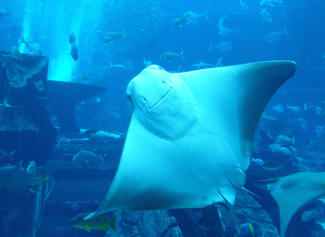 Atlantis Palm Dubai UAE huge aquarium with Seen by Solomon travel blog