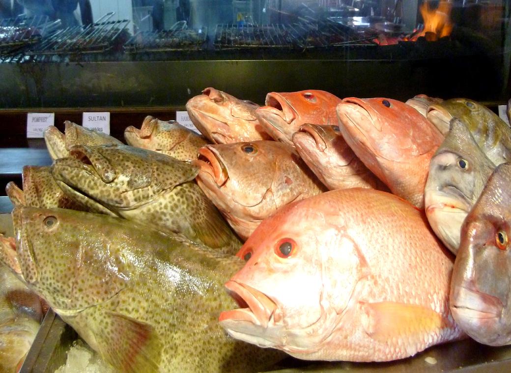 fresh fish near the Dubai Mall lagoon UAE with Seen by Solomon travel blog