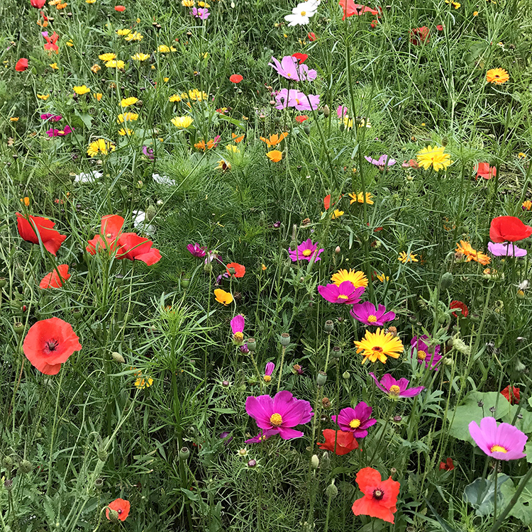 South Downs Sussex UK wild flower fields with Seen by Solomon travel lifestyle blog