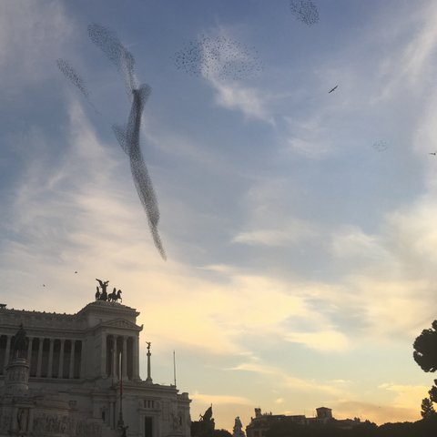 Rome, Italy in December with starlings and murmurations with Seen by Solomon travel blog