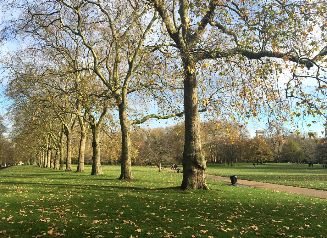 St James Park London UK with tree line down The Mall with Seen by Solomon travel blog