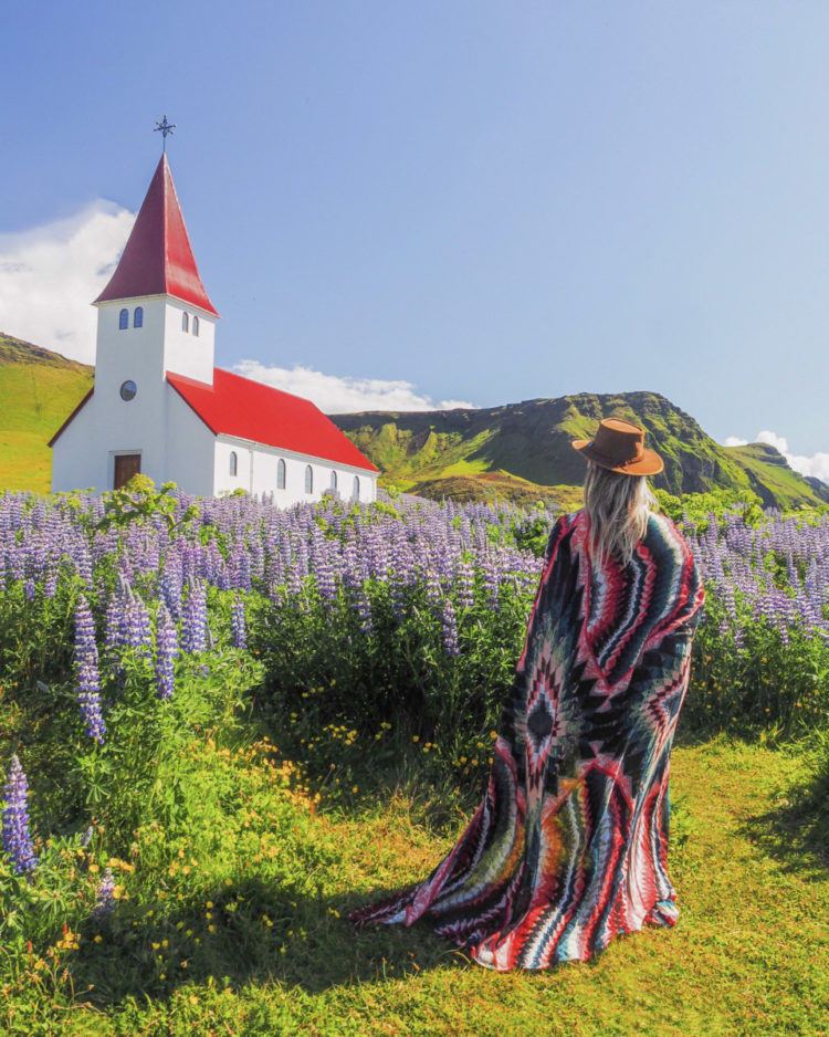 Iceland's lupins – June is the month!