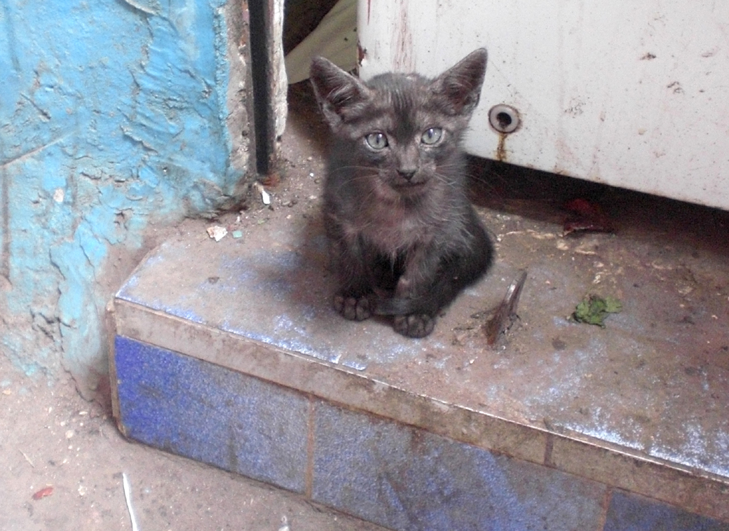 lost kitten in a Marrakech, Morocco, alleyway with Seen by Solomon travel blog